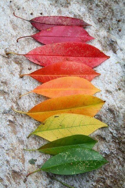 foglie colori diversi